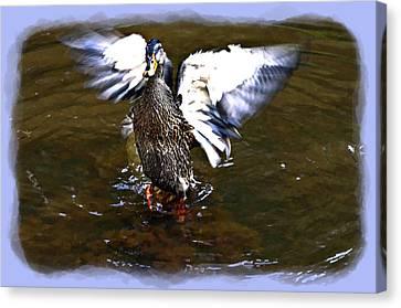Spread Your Wings Canvas Print by Susan Leggett