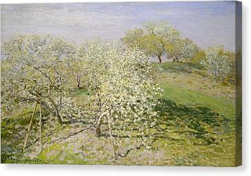 Spring - Fruit Trees In Bloom Canvas Print by Claude Monet