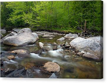 Spring Along The North Fork Canvas Print by Panoramic Images