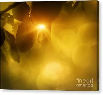 Spring Apple Leaf Background Canvas Print