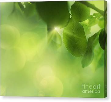 Npetolas Canvas Print - Spring Apple Leaf Background by Mythja  Photography