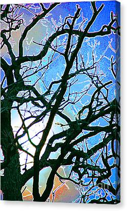 Spring Approaches Canvas Print by First Star Art