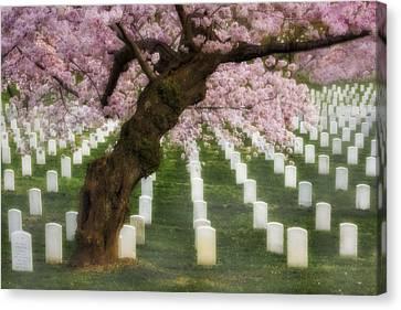 Spring Arives At Arlington National Cemetery Canvas Print by Susan Candelario