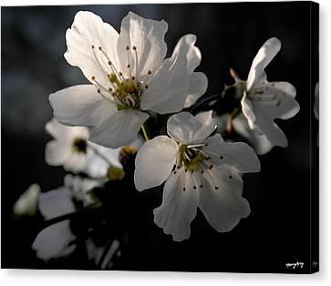 Spring Emerging Canvas Print