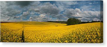 Spring At Oilseed Rape Field Canvas Print by Davorin Mance