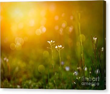 Spring Background Canvas Print