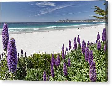 Spring Beach Vista Of Carmel Beach Canvas Print by George Oze