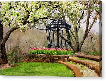 Spring Beauty Canvas Print by Darren Fisher
