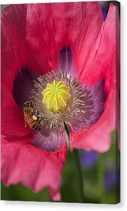 Spring Bees Canvas Print by Bonita Hensley