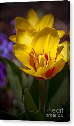 Spring Bloom In Yellow Canvas Print by Julie Palencia