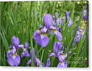 Canvas Print featuring the photograph Spring Bloom by Paul Cammarata