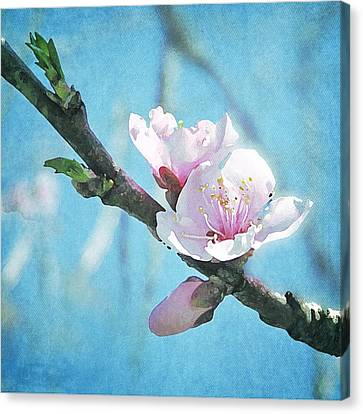 Canvas Print featuring the photograph Spring Blossom by Jocelyn Friis