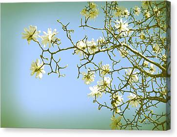 Spring Blossoms Canvas Print by Ann Powell