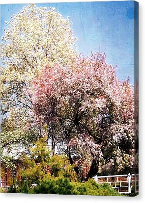 Canvas Print - Spring Blossoms by Marty Koch