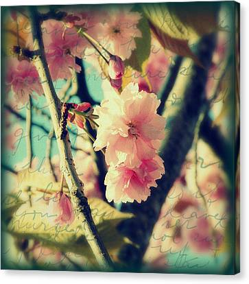 Canvas Print featuring the photograph Spring Blossoms by Micki Findlay