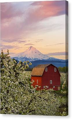 Spring Blossoms Sunrise Canvas Print by Ryan Manuel