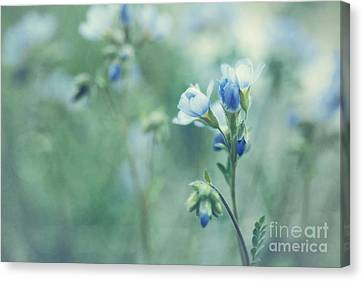 Spring Blues Canvas Print by Priska Wettstein