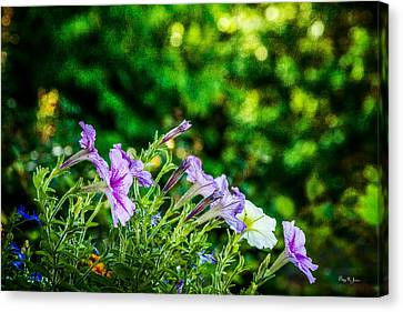 Fine Canvas Print - Flowers - Floral - Spring Bouquet  by Barry Jones