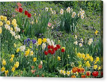 Spring Bulb Garden Canvas Print by Alan L Graham
