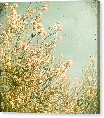 Spring Canvas Print by Cassia Beck