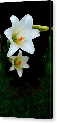 Spring Canvas Print by Cecil Fuselier