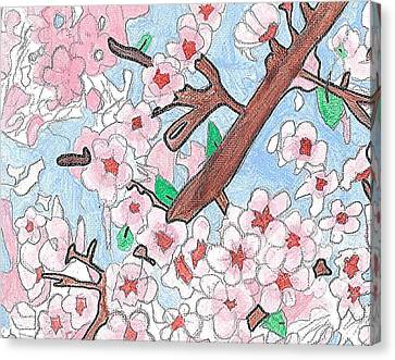 Spring Cherry Blossoms  Canvas Print by Fred Hanna