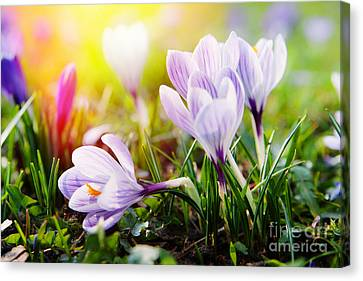 Canvas Print featuring the photograph Spring by Christine Sponchia
