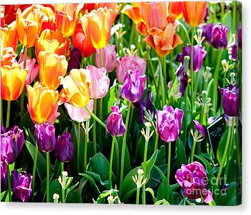 Spring Color Canvas Print by Shijun Munns