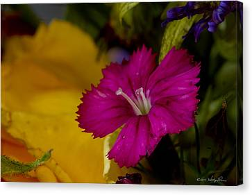 Canvas Print featuring the photograph Spring Colors by Kathy Ponce