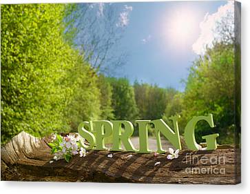 Spring Landscape Canvas Print by Amanda Elwell