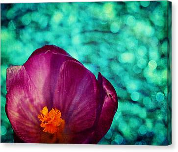 Canvas Print featuring the photograph Spring Crocus by Peggy Collins