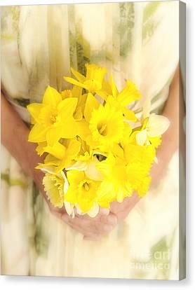 Daffodils Canvas Print - Spring Daffodils by Edward Fielding