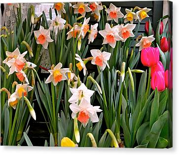 Canvas Print featuring the photograph Spring Daffodils by Ira Shander
