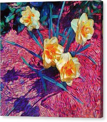 Spring Daffodils On Red - Square Canvas Print by Lyn Voytershark