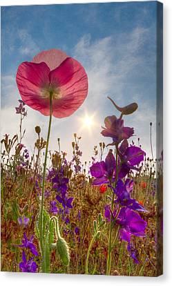 Spring   Canvas Print by Debra and Dave Vanderlaan