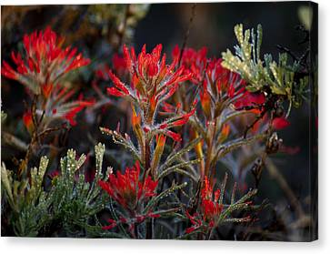 Spring Dew Paintbrush Canvas Print by Eric Rundle