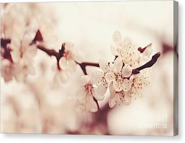Spring Canvas Print by Diana Kraleva