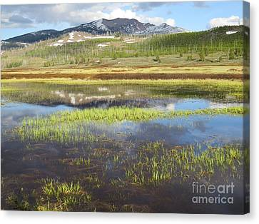 Spring Evening On The Gallatin Canvas Print