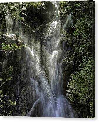 Spring Falls Canvas Print by Gary Neiss