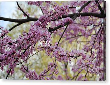 Spring  Canvas Print by Fareeha Khawaja