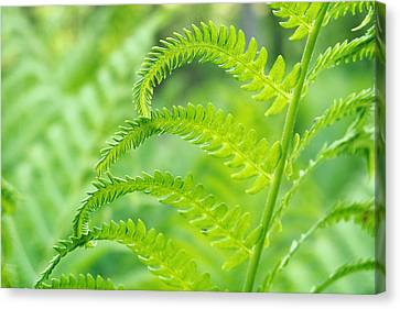 Canvas Print featuring the photograph Spring Fern by Lars Lentz