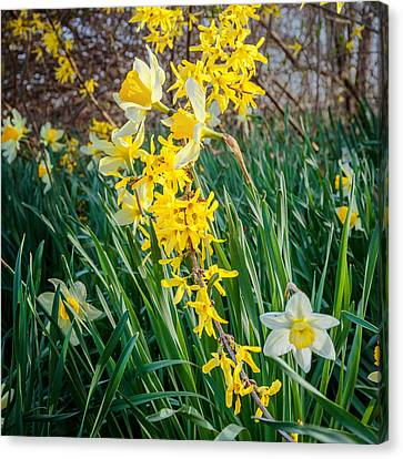 Spring Floral Square Canvas Print by Bill Wakeley