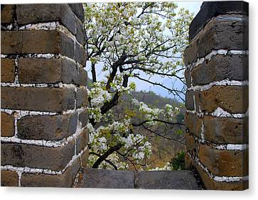 Spring Flowers At The Great Wall Canvas Print by Larry Moloney