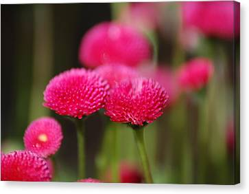 Canvas Print featuring the photograph Spring Flowers by Ron Roberts