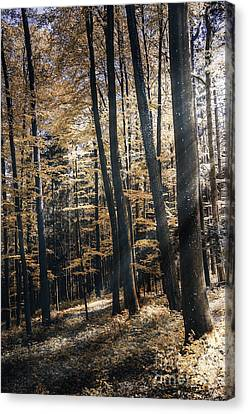 Canvas Print featuring the photograph Spring Forest by Bruno Santoro