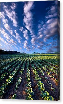 Spring Fresh Canvas Print by Phil Koch