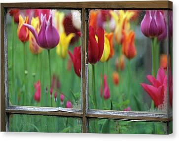Spring Garden Behind Old Window Canvas Print