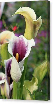 Calla Lily Canvas Print - Spring Garden Series I by Suzanne Gaff