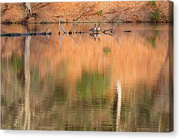 Spring Geese Canvas Print by Bill Wakeley