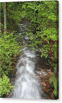 Spring Green Framing Bubble Brook  Canvas Print by Juergen Roth